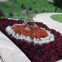 Kompozycje kwiatowe w Iwoniczu Zdroju