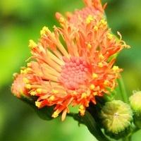 Kwiaty o żeńskim imieniu;)