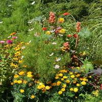 Kwiaty różnokolorowe w ZOO (cz.2)