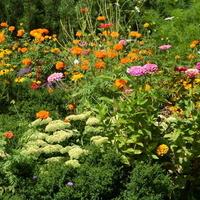 Kwiaty różnokolorowe w ZOO (cz.3)