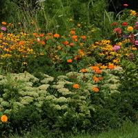 Kwiaty w różnym kolorze w ZOO