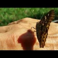 Prywatny motyl!?