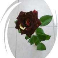 Różyczka dla Was