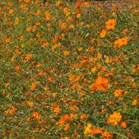 Szpaler kwiatów w ogrodzie botanicznym