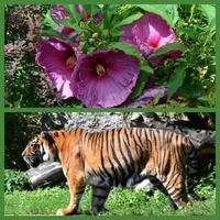 Wielkie kwiaty i duży zwierz w ZOO