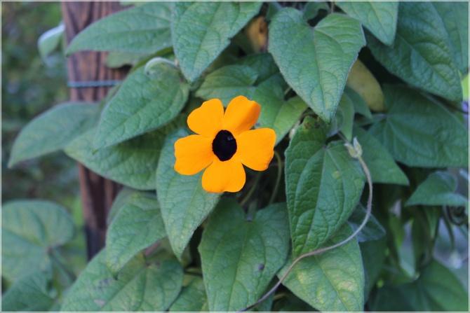 Jeden kwiatek...