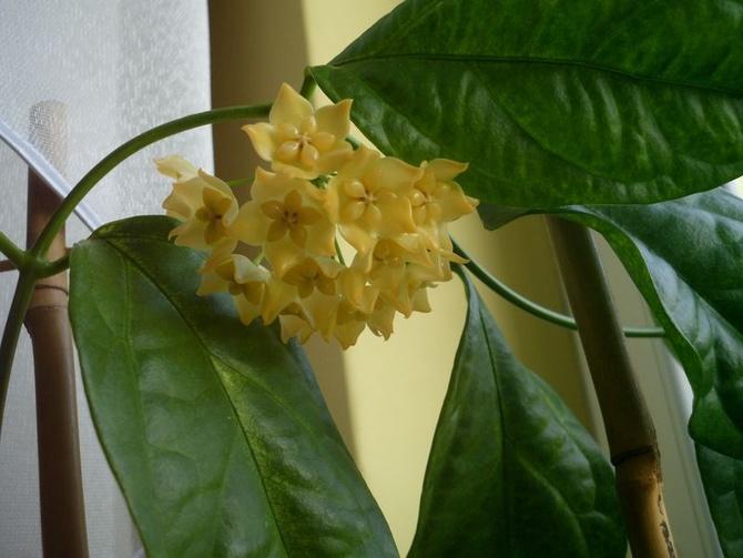 Pierwszy kwiatostan