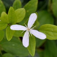 Kwiatek w parku (Ż. Wola)