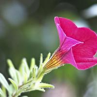 Kwiatek z tarasu