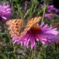Motyle...