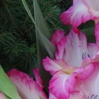 Na dobranoc - życzę różowych, słodkich snów