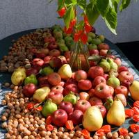Orzechy,jabłka,gruszki