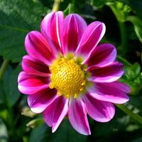 Spacer po O.B. zakończę tym kwiatem