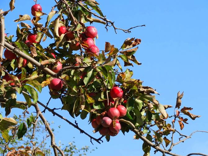 Może jabłuszko przed snem ?