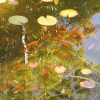 moje rybki :)
