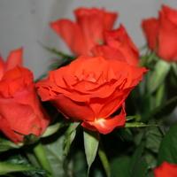 Róże - wracają te w wazonach.....