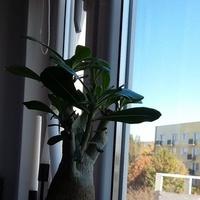 roślina po przecięciu jesiennym