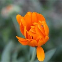 Tym Razem Pomarańcz