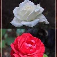 Dla Naszej Biało-Czerwonej...