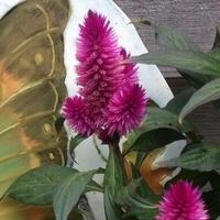 Ogrodowy motylek ;-)