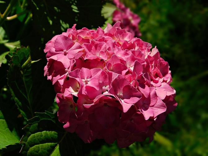różowa kula ..........