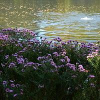 Jesienne kwiaty nad wodą