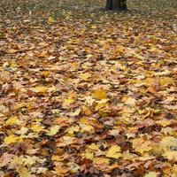 Jesienne liście w parku