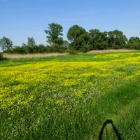 Kolory wiosny- najpiękniejsze :)