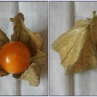 Owoc Miechunki