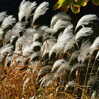 ozdobne trawy nad wodą