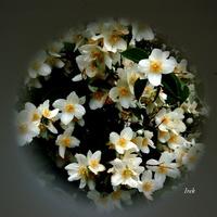 Planeta Z Kwiatami