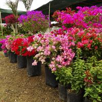 Sklep ogrodniczy w Limie