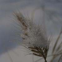 U mnie nadal zimowo...
