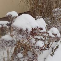 Zimowe ozdoby w ogrodzie :)
