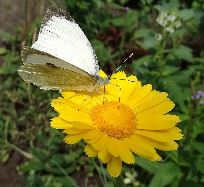 Tylko motylków brak :)))