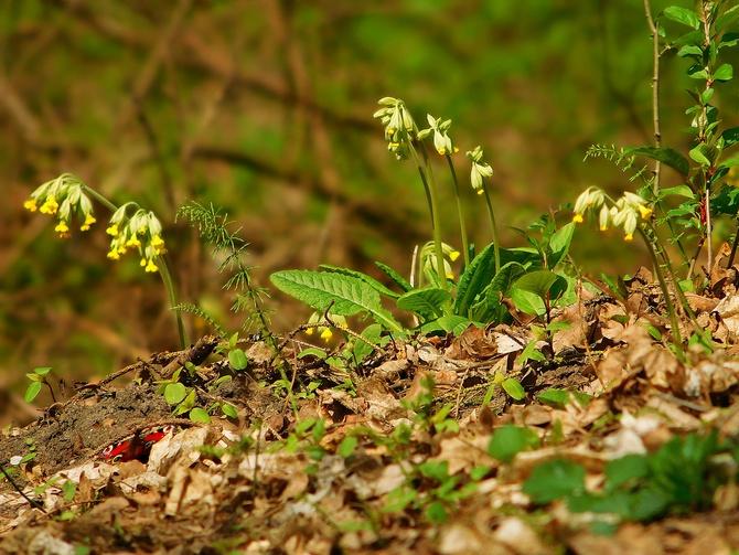 wiosna w lesie ....