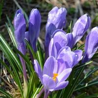 Coraz bliżej do wiosny