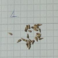 Czyje to nasionka?