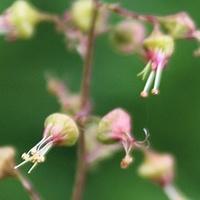 Drobne Kwiatki Telim