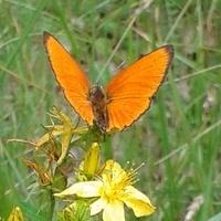 Jak powstały motyle
