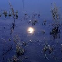 Kto mi utopił księżyc ? :))