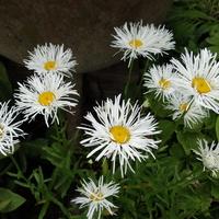 Kwiaty przynoszą radość...