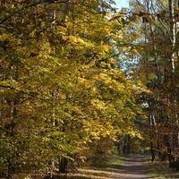 Tak wyglądały w lesie drzewa jesienią
