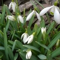W oczekiwaniu na wiosnę