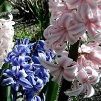 Zapachy wiosny - już niedługo:)