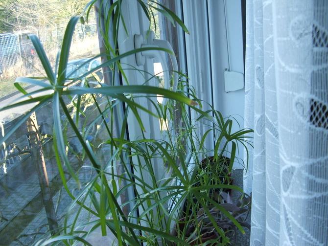 Anturium :))) Twój papirus z rodzaju MACHNIOM