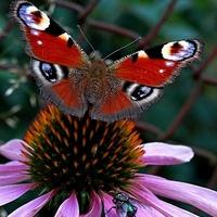 Ania wystartowała z motylkiem....