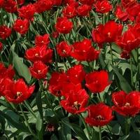 Czerwone kwiaty na rozgrzewkę