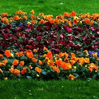 Dywanik kwiatowy (miękki)