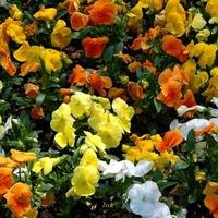 Kwiaty w różnych kolorach.